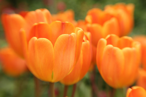 The power of orange,  Phipps Conservatory.  Pittsburgh, Pa.