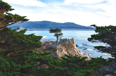 The Lone Cypress. 17 Mile Drive. Pebble Beach, California.