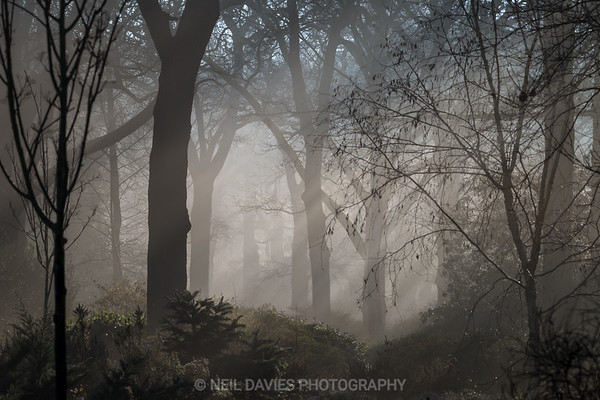 Trees through the mist