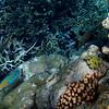 Great Barrier Reef scene