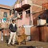 young man kneeling goat