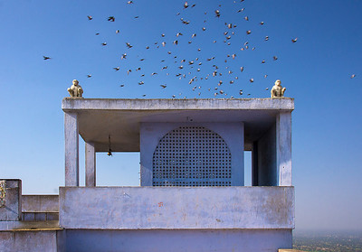 burst of birds behind Hanuman Monkey Temple