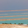 palms and earthen dams in Dead Sea