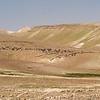 bedouin and sheep near Be'ersheva 2