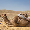 kneeling camel
