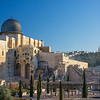 cedars outside Al Aqsa Mosque