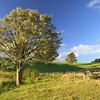 tree & gate Rawhitiroa