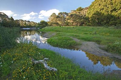 Waitangi River bank