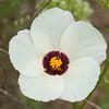 saffron burgundy and cream