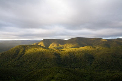 African montane forest