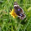unidentified Tanzanian butterfly