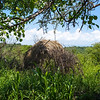 abandoned Hadza hut