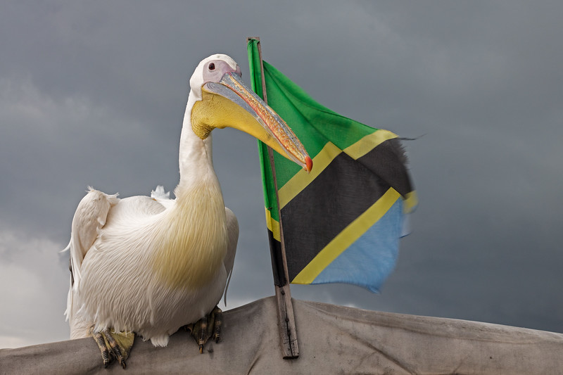boat prow and flag wtih Big Bird