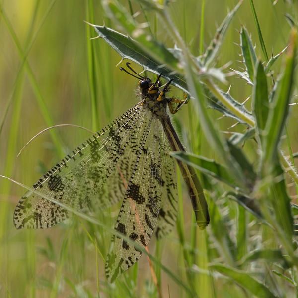 dragonfly in Tanzania