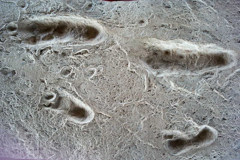 cast of Australopithecus afarensis footprints Laetoli
