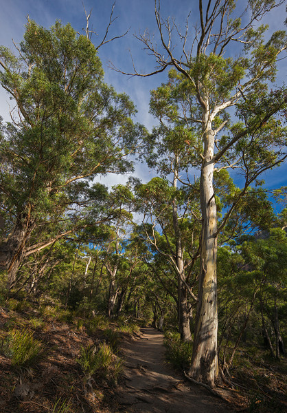 trail to Wineglass Bay