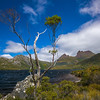 tree rock Dove Lake Cradle Mountain