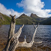 dead tree Dove Lake Cradle Mountain