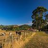 Tasmanian farm
