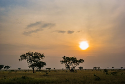 acacia savannah sunset