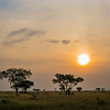 acacia savannah sunset
