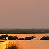iconic elephant parade crossing Nile swamp at sunset