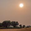 hazy sunset over savannah with 3 impalas