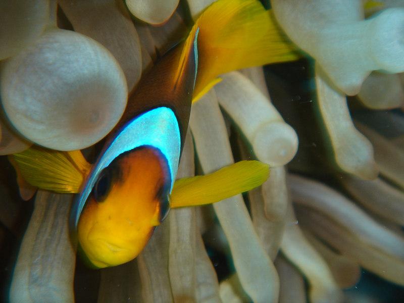 a little fishy