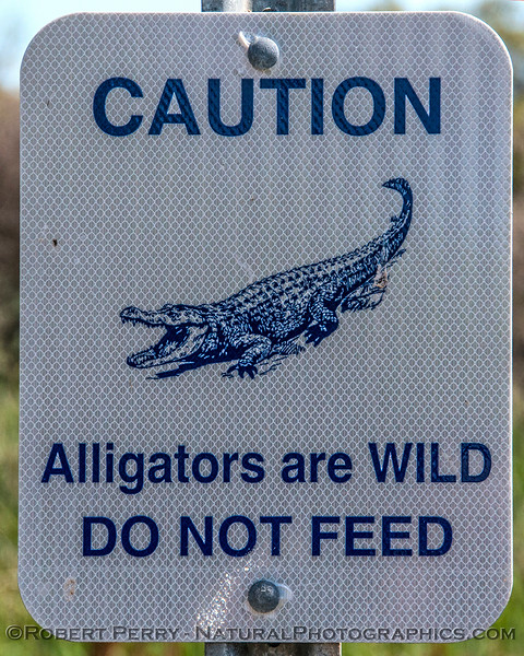 Alligator mississippiensis WARNING SIGN 2017 03-16 Aransas NWR TX-064