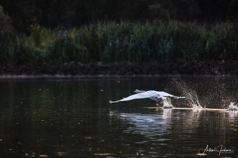 2017 Nationaal Park de Biesbosch 12.jpg
