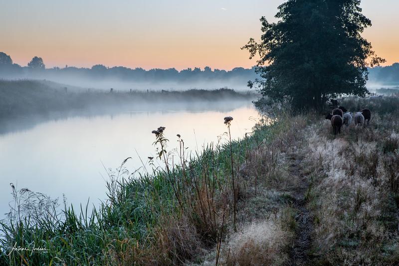 2015 Nature Sint Michielsgestel 1.jpg