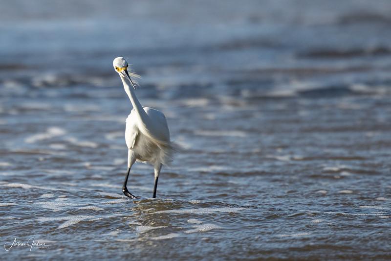 Birds @ Big Talbot Island Florida