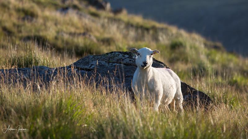 2015 Vacation Wales 26.jpg