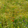 Multi flower bed