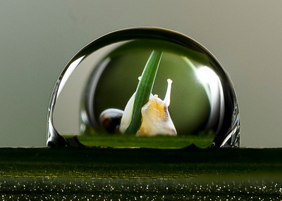 Snail in a droplet