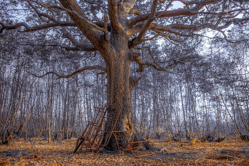Rusty Nature