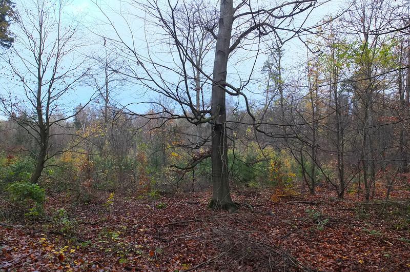 The woods, dark tree