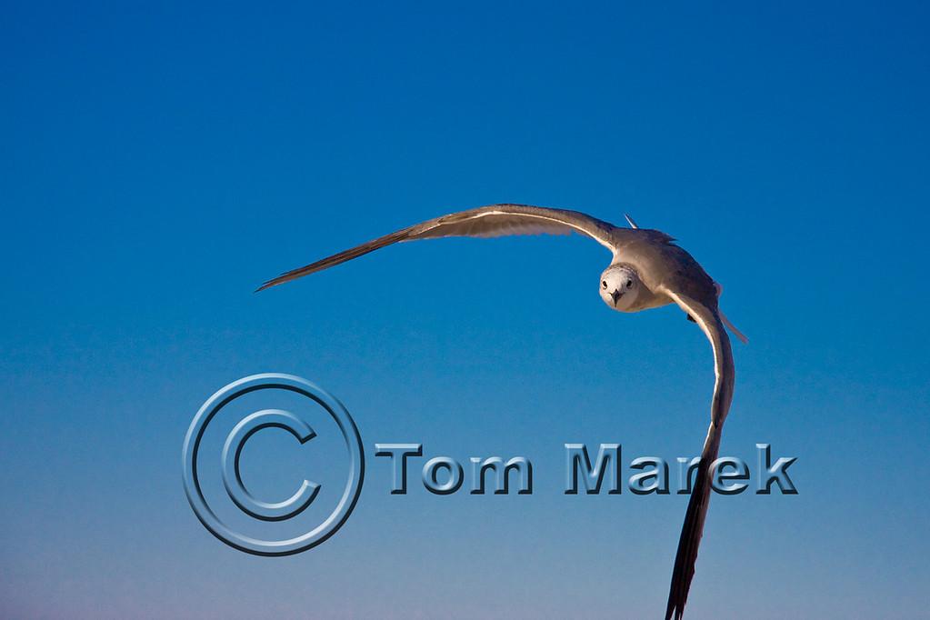 Seagulls 037_1