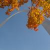 Fall Arch