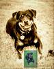 PetPortrait-Dog-9326-Edit sepia full body sml CR