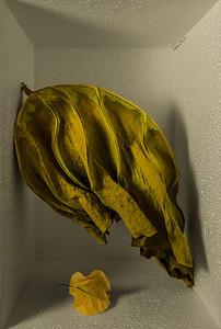 Two Leaves for Magritte
