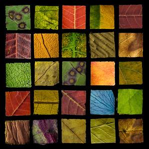 """Autumn Squared - 40"""" x 40"""""""