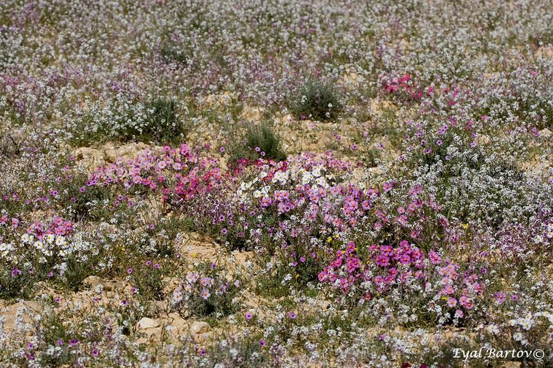 שמשון השלחופיות בורות לוץ הר הנגב