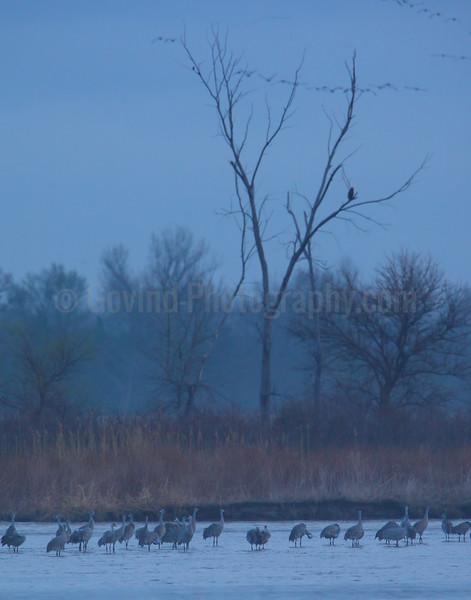 Crane Watcher