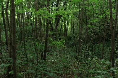 A l'intérieur de la jungle derrière la maison de Véro et Laurent.