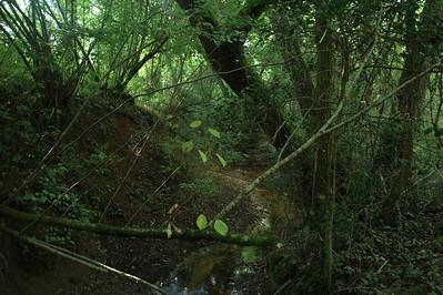 Le chemin passe au-dessus d'un petit ruisseau.  Le pont est heureusement encore en bon état.  Plusieurs poutrelles en acier.  Je ne vois pas de martins pêcheurs.