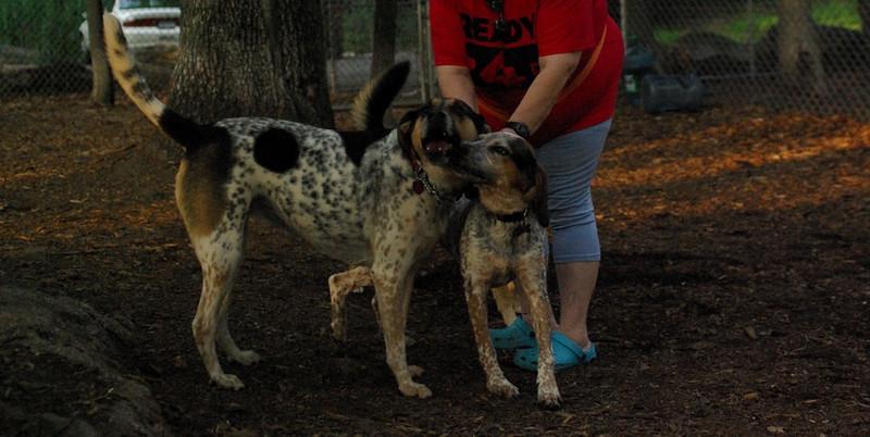 CALI & LULU (hounds)