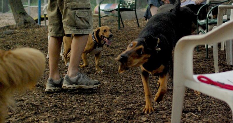 copper, Sammy (hound)