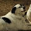 MARLEY (boy pup) SHADES 6