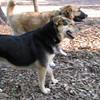 Maddie, joba (new pup 10mo )